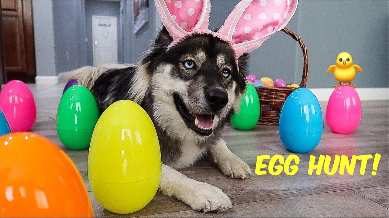 Kakoa's First Easter Egg Hunt!