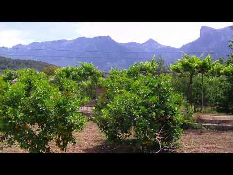 Orange Trees - Soller / Mallorca (Spain)
