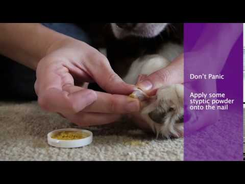 What To Do If Dog's Nails Are Bleeding