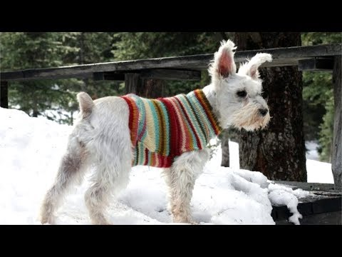 How to Turn an Old Sweater into an Adorable Dog Sweater
