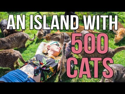 A Tropical Island with 500 CATS!