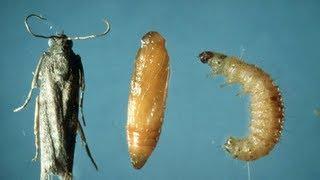 How To Get Rid Of Pantry Weevils Moths