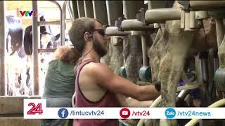 Mỹ: Nông dân nuôi bò sữa tự tử vì phá sản | VTV24