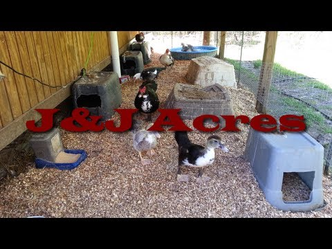 Duck House - Chicken Coop - and other Poultry Coop Bedding