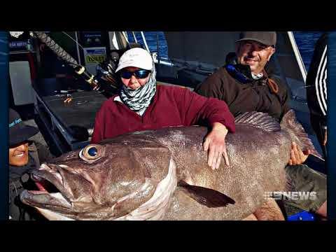 Fish Watch | 9 News Perth