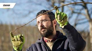 POTATURA E FORMA DI ALLEVAMENTO DELL' ALBICOCCO – guida con consigli per la potatura