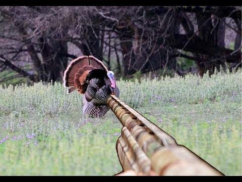 How to Stalk Hunt for Wild Turkey