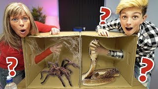 Whats In The Box Challenge animals