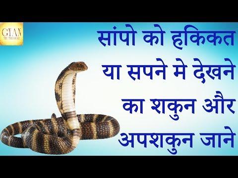 सांपो को हकिकत या सपने मे देखने का शकुन और अपशकुन जाने // Snake Auspicious or  Inauspicious
