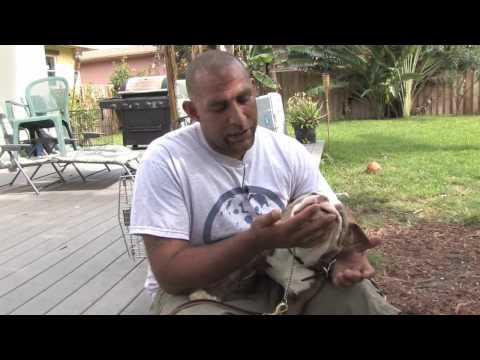 Dog Training : Signs of Aggression in Puppies