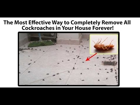 The Most Effective Way to Completely Remove All Cockroaches in Your House Forever