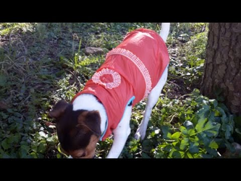 How To Make A Cute Dog Coat - DIY Crafts Tutorial - Guidecentral