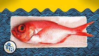 How To Make Fish Less Fishy (Chemistry Life Hacks)