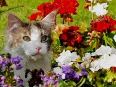 How To Deter Cats From Your Flower Beds