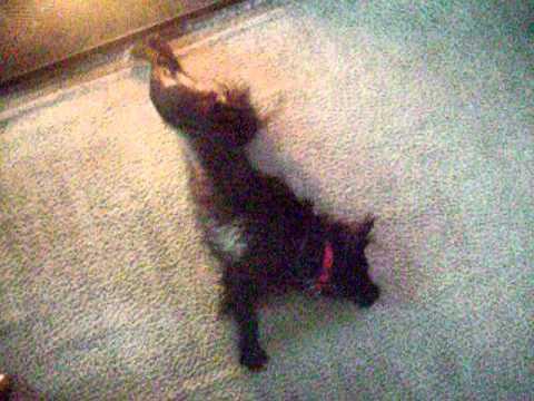 Wet Dog, Warm Fire:  After Walk in Rain