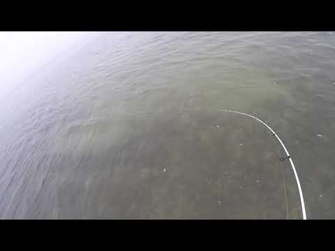 Landing a few big trout within a few mins of each other!