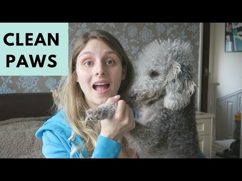 HOW TO CLEAN A DOGS PAWS AFTER A WALK