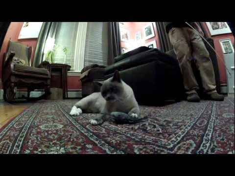 Smoke the Cat vs. The Mouser