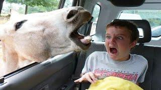 Animal Insanity - Funny Animal videos - Funny Baby Videos  2020