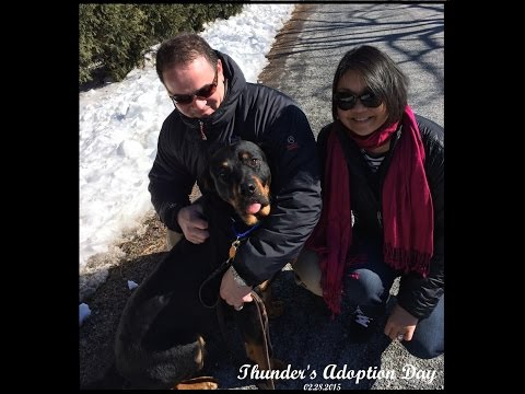 Thunder's journey from Car lot to his loving Home!