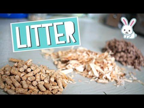 Different Rabbit Litters