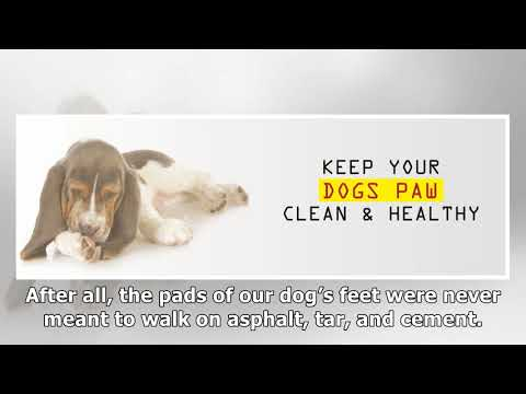 How to Keep Your Dog's Paws Clean and Healthy