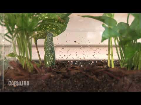 How to Set Up a Terrarium