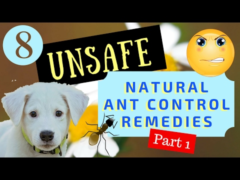(Part 1) 8 Unsafe Natural Ant Control Remedies (for Dogs)
