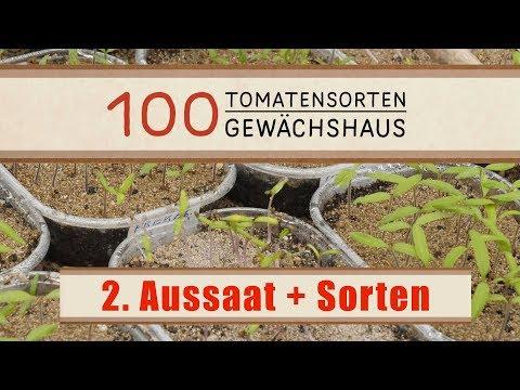 Tomaten - Aussaattipps und Sorten - Das 100 Tomatensorten GWH