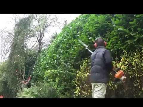 Trimming  Huge Laurel hedges
