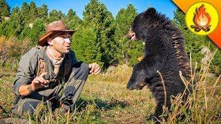 Feisty Baby Bear!