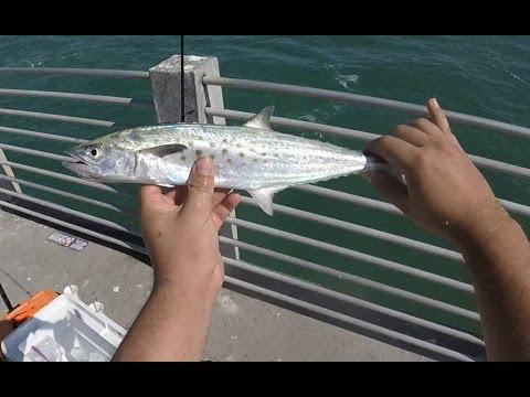 Fort Desoto Pier Fishing - SPANISH MACKEREL