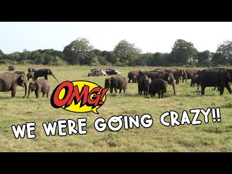 THE BEST PLACE IN THE WORLD TO SEE WILD ASIAN ELEPHANTS! | Vlog #101