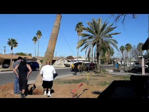 PX5 PALM TREE REMOVAL