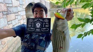Download HUGE RARE FISH CAUGHT WHILE URBAN FISHING!!! (Surprise Ending) Video