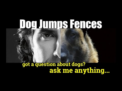 How to Keep Dogs from Jumping a Fence - ask me anything - Dog Training and Safety