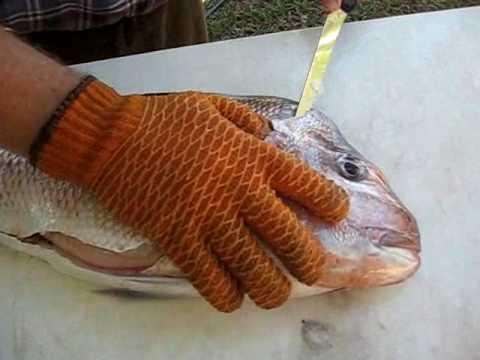 Fillet a Fish (Snapper)