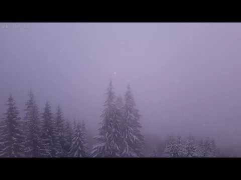 Light Snow Storm with Relaxing Sounds of Wind and Snow Falling Over the Forest - 4K Video - 10 Hours