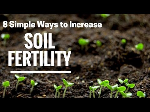 How to improve garden soil quality: Here are 8 proven techniques