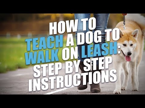 How to Teach Your Dog to Walk On a Leash (The Easy Way)
