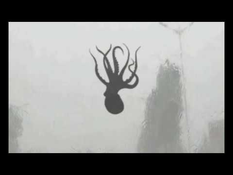 WILD! Octopus, Starfish and Shrimp Fall from the Sky During Intense Storm In China