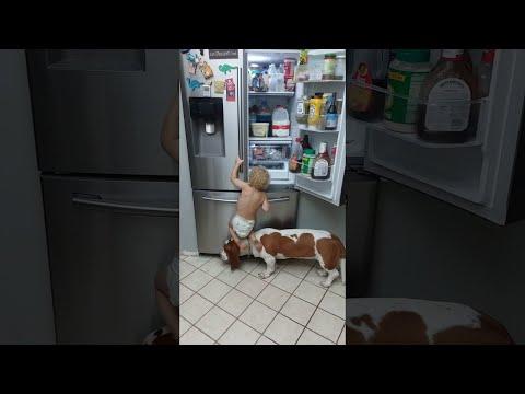 Little Boy and Basset Hound Tag Team to Get Food || ViralHog