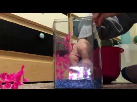 Water Change & Redecoration of a 1 Gallon Betta Tank