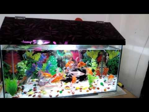 Bobby rawat home awesome fish aquarium video