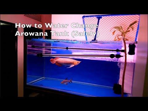 How To Water Change Arowana Tank