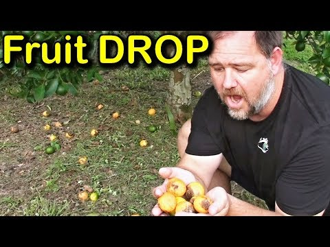 Why is My Tree Dropping Fruit & How to Stop Fruit Drop