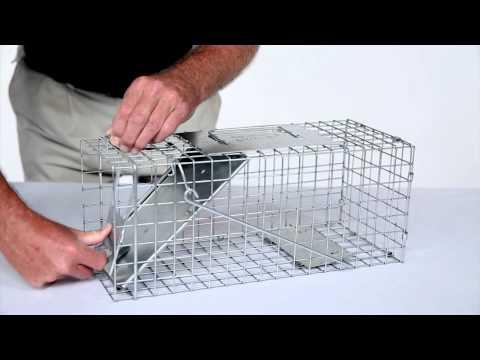 How to Set: Havahart® Small 1-Door Trap Model #1077 for Small Squirrels & Small Rabbits