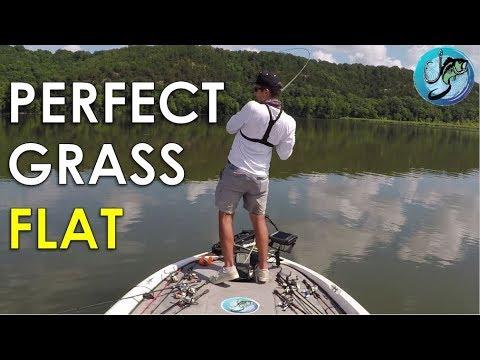 How to Find Summer Bass on Grass Flats