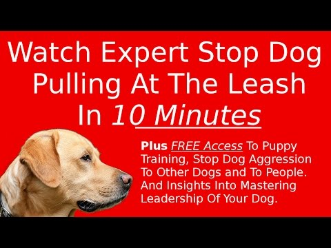 Stop Dog Pulling At The Leash – See It Done In 10 Minutes