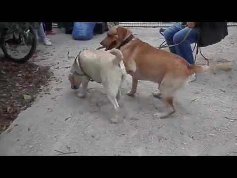 Xxx Mp4 تزاوج الكلاب البوليسية Xxnx 3gp Sex